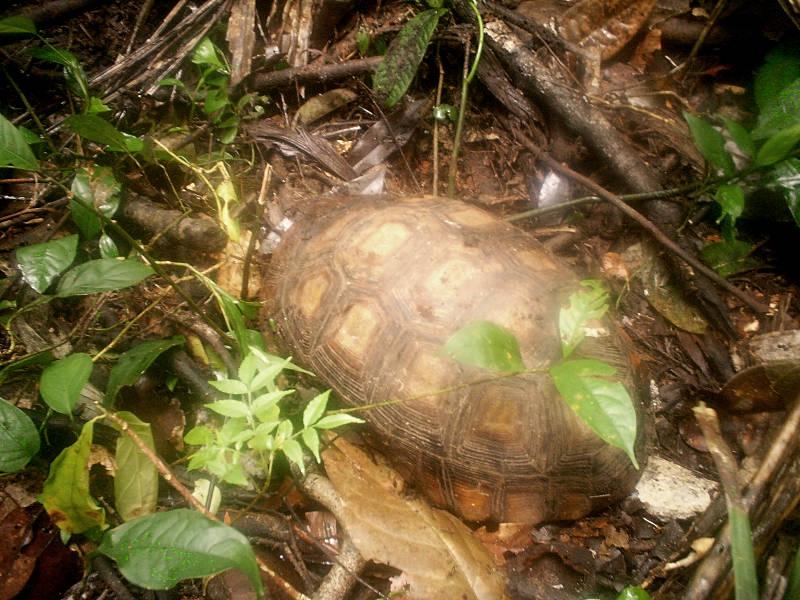 Turtle on the wild