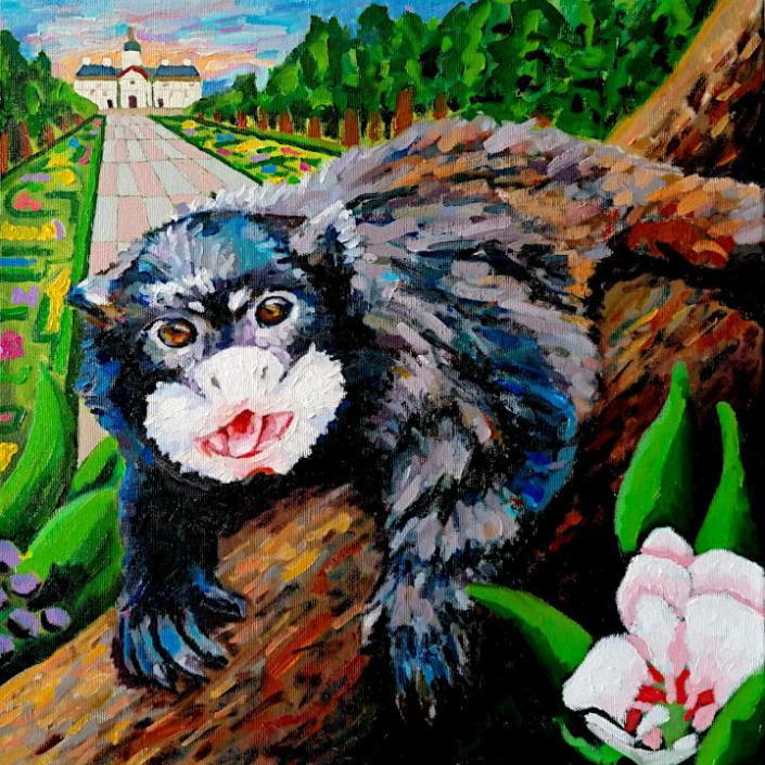 Black mantled tamarin by Arturo Laime