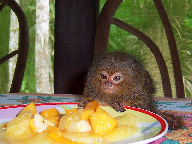 Kiki genießt ihr Frühstück