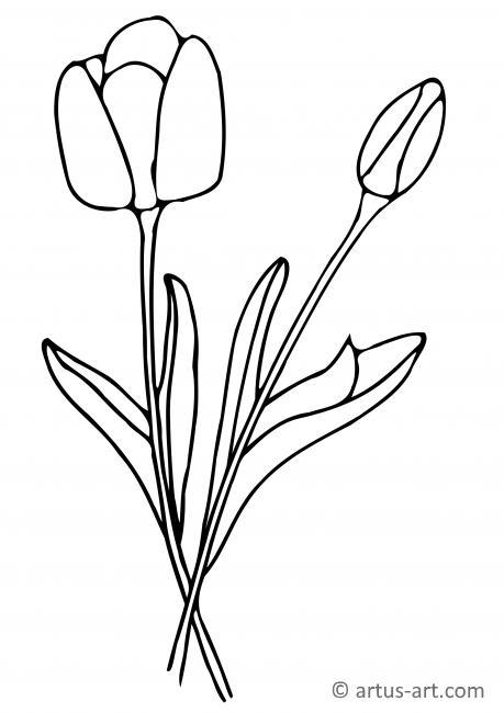 Tulip Coloring Page Printable Coloring Page Artus Art