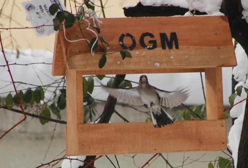 Artvin'de zorlu kış şartlarında kuşlar için aş evi yapıldı