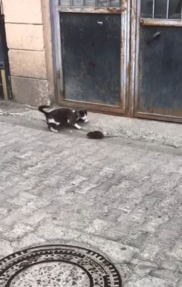 Artvin'den fare ile kedinin güldüren görüntüsü