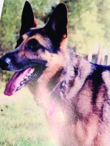 Sarge, a German Shepard, belonging to Sgt. Aljoe, was shot by police in a 'wrong house' raid.