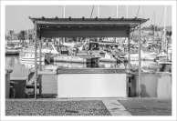 Etales poisson - Saint Cyprien Plage (5 sur 16)