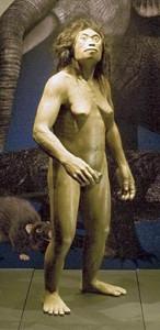 復元されたフローレス原人(国立科学博物館提供)