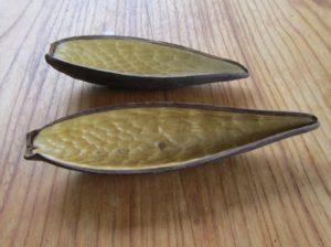 ガガイモの舟