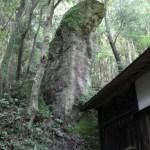 長崎の磐座達 立神は巨大な男根