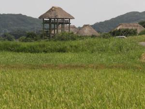 縄文の稲作-1