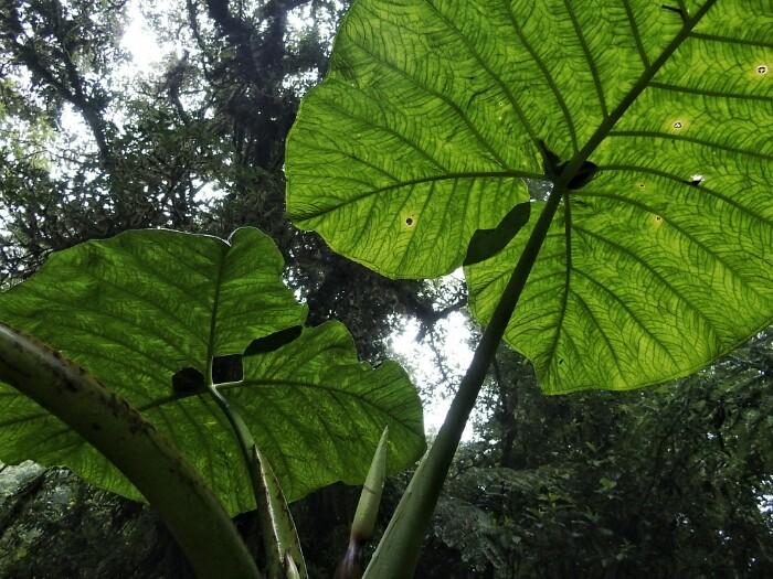 Monteverde. Costa Rica.