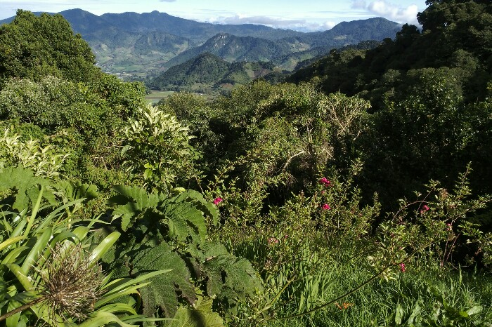 Quetzalen Ibilbidea, Cerro Puntatik Boquetera. Panama.