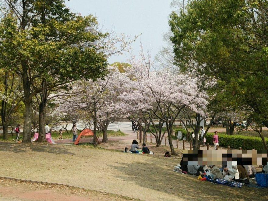 千田公園 桜