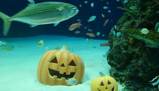 マリホ水族館のハロウィンの装いをベタ褒めしてみます 雰囲気変わって面白いよ