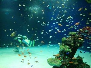 マリホ水族館 ラグーン