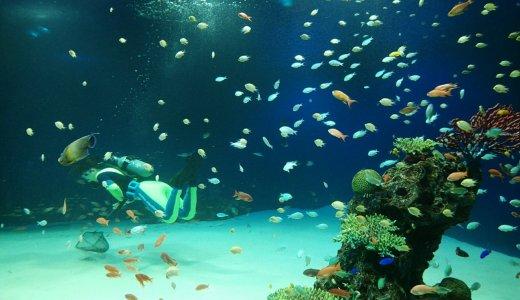 マリホ水族館で「オリジナル水槽」アイデアを募集中!ちょっと楽しそう♪~7月31日