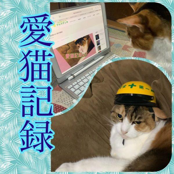 愛猫記録#6【私の眠りを…】