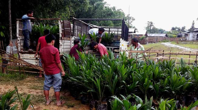 RKMMS Distributes OIL Palm Seedlings to Beneficiaries
