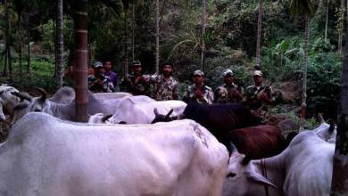 BSF Seized Cattle during Anti Smuggling Drive