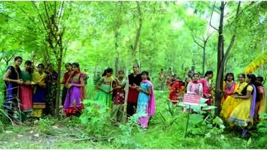 "Photo of Village ""Piplantri"" Where 111 Trees are Planted on the Birth of Girl Child"