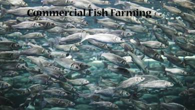 Training & Demonstration Programme on Commercial Fish Farming