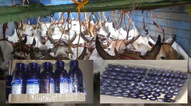 Kokrajhar, Police, seizes, Truck , cough syrup bottles, Cattle