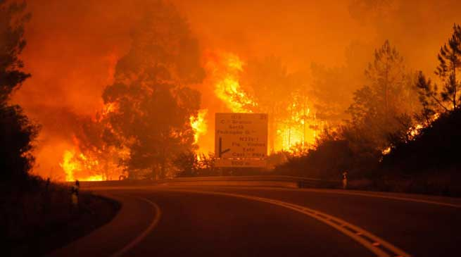 Forest Fire in Portugal kills 58 people