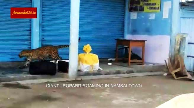 VIDEO: Leopard roaming in Namsai town of Arunachal Pradesh