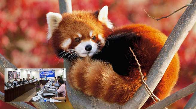 Arunachal : Khandu approves Red Panda Conservation Plan
