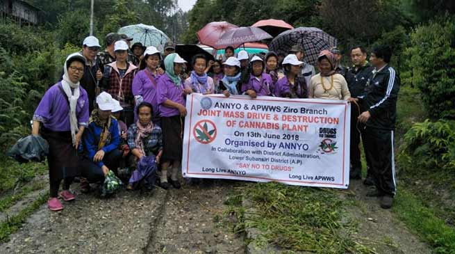 Arunachal: Joint Drive for destruction of cannabis plants