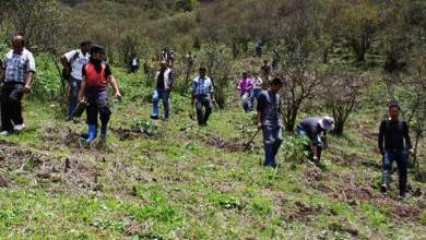 Photo of Arunachal: World Environment Day celebrates all over state