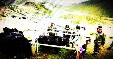 Arunachal: 120 yaks get treated in veterinary camp organised by Indian Army in Tawang