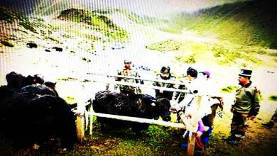 Photo of Arunachal: 120 yaks get treated in veterinary camp organised by Indian Army in Tawang
