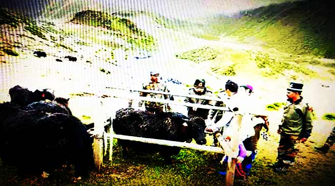 Arunachal: 120 yaks get treated in veterinary camp organised by Indian Army in Tawang