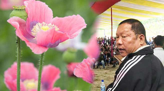 Arunachal:Congress will form the next govt and legalise opium cultivation- Takam Sanjoy