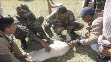 Photo of Arunachal:  Army Organises Veterinary camp in Namsai