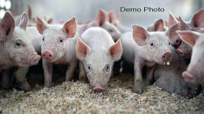Arunachal:Skill Training Programme on Scientific Pig Farming concludes at KVK Namsai