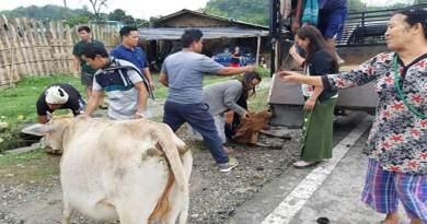 Itanagar: 40 stray animals evicted