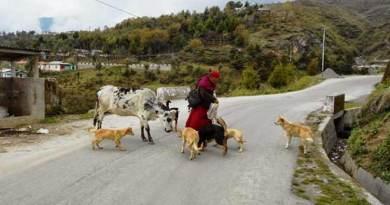 Arunachal: Stray dog menace hits Tawang