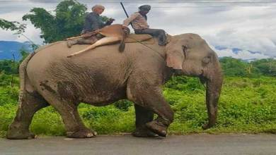 Photo of Arunachal: two persons carrying hunted Sambar on elephant captured on Camera