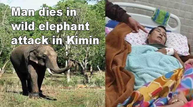Arunachal: Man dies in wild elephant attack in Kimin