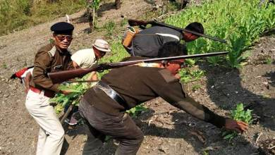 Photo of Arunachal: 120 hectares of illegal poppy plantations destroyed in Longding