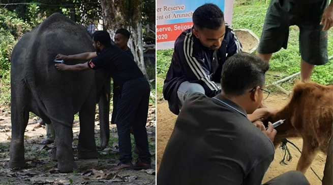 Arunachal: vaccination camp for animals in PTR