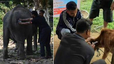 Photo of Arunachal: vaccination camp for animals in PTR