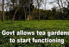 Arunachal govt allows tea gardens to start functioning from April 15