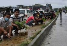 Itanagar- 300 saplings planted along NH-415 by youths of Ward No-6