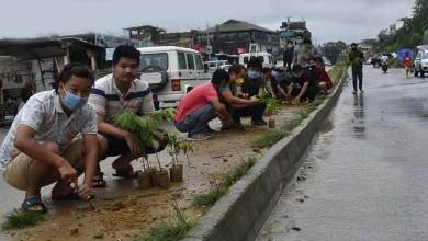Photo of Itanagar- 300 saplings planted along NH-415 by youths of Ward No-6