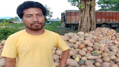 Photo of Arunachal: Medo Produces Tons of organic Pumpkin, emerging as agriculture hub
