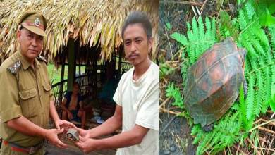 Arunachal: Keeled box turtle released in Sibiyamukh Range of DEWS