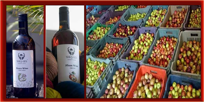 Arunachal: After Kiwi, now pears and plum wines launched in ziro