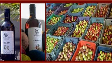 Photo of Arunachal: After Kiwi, now pears and plum wines launched in ziro