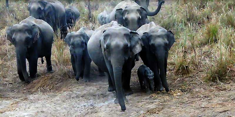 Arunachal- Wildlife thriving in D. Ering Wildlife Sanctuary, welcomes visitors